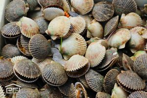 Scalloping Homosassa, FL and Crystal River, FL